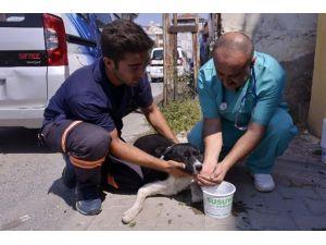 Maltepe Belediyesi 9 Bin Hayvanı Sağlığına Kavuşturdu