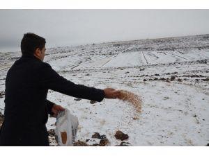 Başkan Yılmaz'ın Talimatıyla Doğaya Yem Bırakıldı