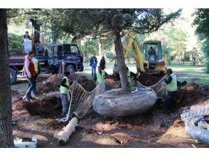 EXPO 2016'da Ağaç Nakli Rekoru Kırıldı