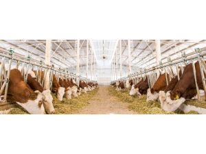 Yenişehirli Besicilere 6 Milyon TL Süt Desteği