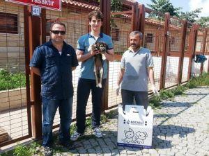 Büyükşehir'den Sokak Hayvanlarına Bakım