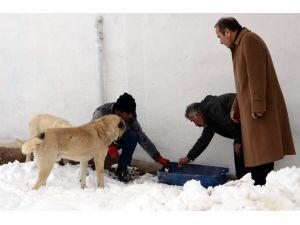Belediyeden sokak hayvanlarına yiyecek servisi