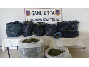 Şanlıurfa'da 67 kilo esrar yakalandı