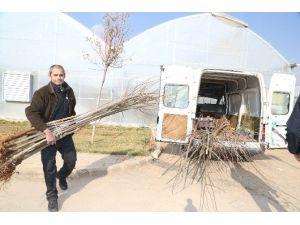 Şahinbey'den Vatandaşlara 100 Bin Fidan