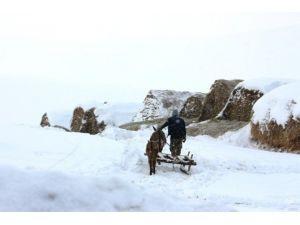 Kar Yağışı Hayvan Besicileri İçin Çile Oldu