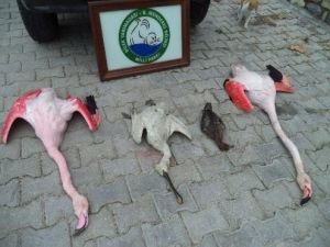 Milli Park'ta Kaçak Flamingo Avı