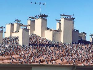 Güvercinlerin güneşi uğurlama seremonisi