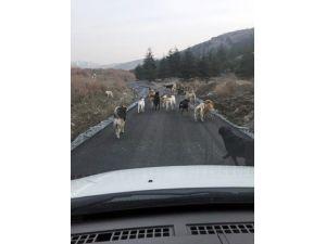 Patiliköy'e Yaşam Yolu