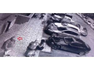 Köpek Hırsızları Kamerada