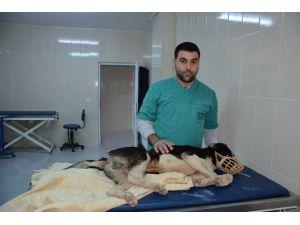 Yaralı Köpek İçin 300 Kilometrelik Seferberlik