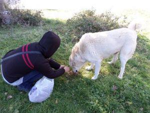 Orhangazi Belediyesi Sokak Hayvanlarını Unutmadı