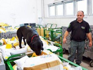 Meksika'dan Macaristan'a Postayla 16 Kilo Esrar Getirtince Yakayı Ele Verdi
