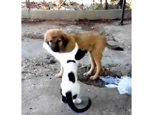 Kedi Ve Köpeğin İlginç Dostluğu