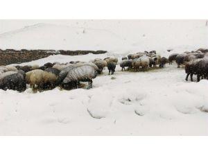 Bingöl'de Kar Ulaşımı Vurdu