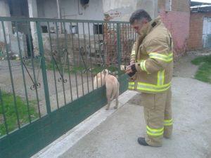 Kapıya Sıkışan Köpeği İtfaiye Kurtardı