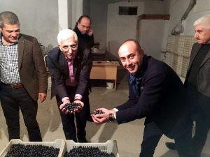 Mudanya Zeytin Tarım Satış Kooperatifi 44 milyon liralık zeytin aldı