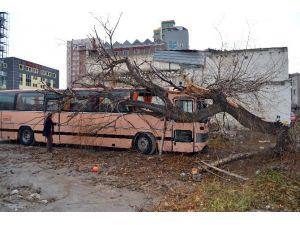Şiddetli Rüzgar Nedeniyle Otobüsün Üzerine Ağaç Devrildi