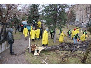 Rüzgar ERÜ'de Ağaçları Devirdi, Kongre Merkezi'nin Çatısını Uçurdu