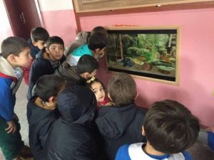 Pazarlar'da İlkokula Dev Akvaryum