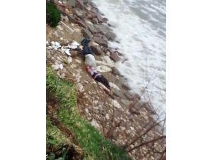 Ayvalık'ta İki Mülteci Cesedi Kumsala Vurdu