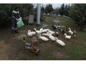 Fuardaki Ördeklere Yem Desteği