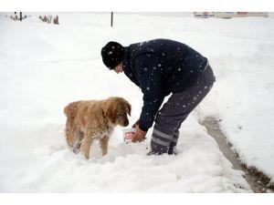 Uludağ'daki hayvanlara yiyecek yardımı