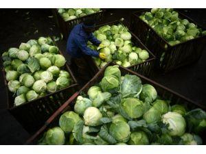 Rusya, Türkiye'den gelen 16 ton lahanayı geri gönderdi