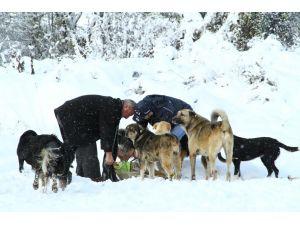 Soğuktan etkilenen hayvanlara yem takviyesi