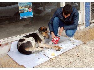 Sokak Hayvanlarına Vatandaşlar Sahip Çıkmaya Çalışıyor