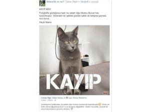 Kayıp Kedi 'Atlas' İçin Sosyal Medyada Seferber Oldular