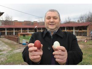 Bu Tavuklar Rengarenk Yumurtluyor