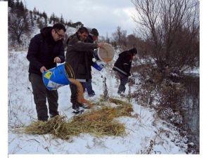 Kar Yağışı Sonrası Bilecik İlinde Doğadaki Hayvanlar Unutulmadı
