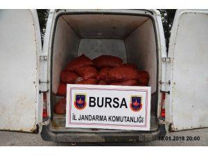 Bursa'da 1 Ton 200 Kilo Kaçak Midye Ele Geçirildi