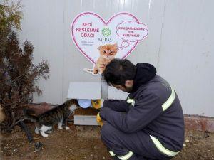 Meram Belediyesi Sokak Hayvanlarına Sahip Çıkıyor