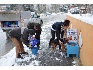 Bozüyük Belediyesi'nden Sokak Hayvanları İçin Mama