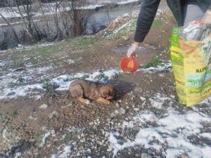 Akyazı Belediyesi Sokak Hayvanlarına Yem Bıraktı