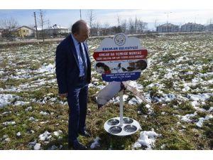 Erenler Belediyesi Sokak Hayvanlarına Yem Bırakıyor