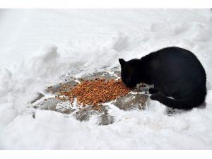 Kar Yağışı Sokak Hayvanlarını Olumsuz Etkilemesin