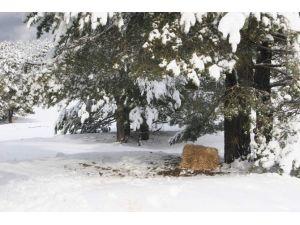 Soğuk Havada Yaban Hayvanları Unutulmadı