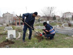 Sıptırız Mezarlığı'na 300 Adet Fidan Dikildi