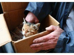 Eyüp Belediyesi, Yaralı Kediye Sahip Çıktı