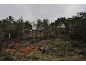 Bodrum'da Orman Yangınlarına Karşı Önlem Alınıyor