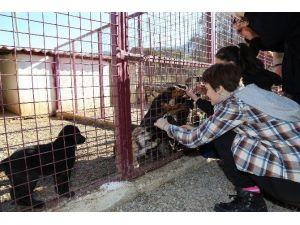 Öğrenciler, Bakım Merkezindeki Can Dostlarını Ziyaret Etti