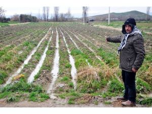Geç Gelen Yağmur Patates Üreticisini Vurdu
