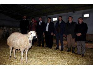 Yemde KDV'nin Yüzde 1'e İndirilmesi Hayvancılıkla Uğraşan Vatandaşları Memnun Etti