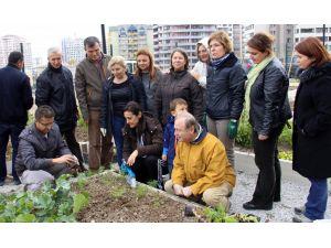 Çankaya Belediyesi'nden 'sebze yetiştiriciliği' eğitimi