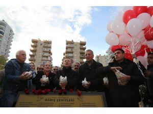 Mezitli'de Jacaranda Korulukları Artıyor