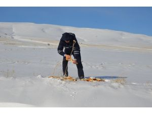Bünyan'da yaban hayat için doğaya yiyecek bırakıldı