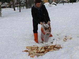 Sokak Hayvanlarına Mama Ve Ekmek Dağıtıldı