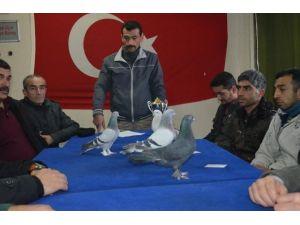 Malatya'da Güvercin Yarışması Yapılacak